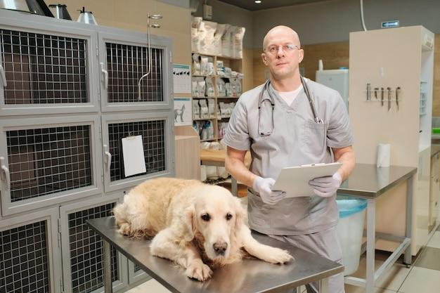 Retrato de veterinário maduro de uniforme olhando para a câmera enquanto trata o cão doente na clínica veterinária