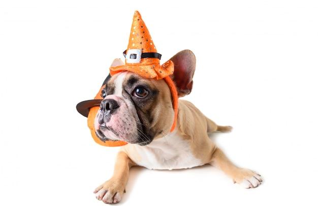 Retrato do buldogue francês bonito com chapéu halloween isolado