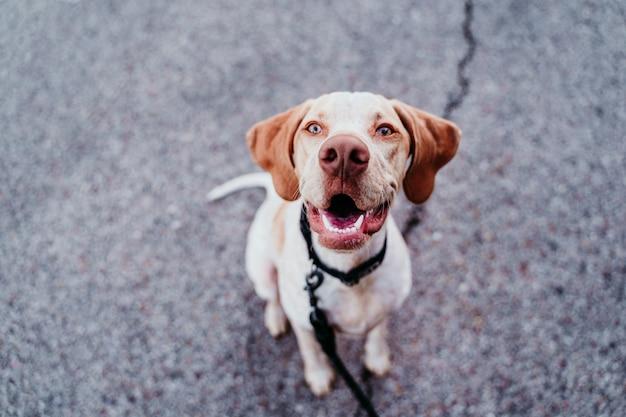 Retrato do cão bonito de raça mista, sentado ao ar livre no parque, olhando para a câmera