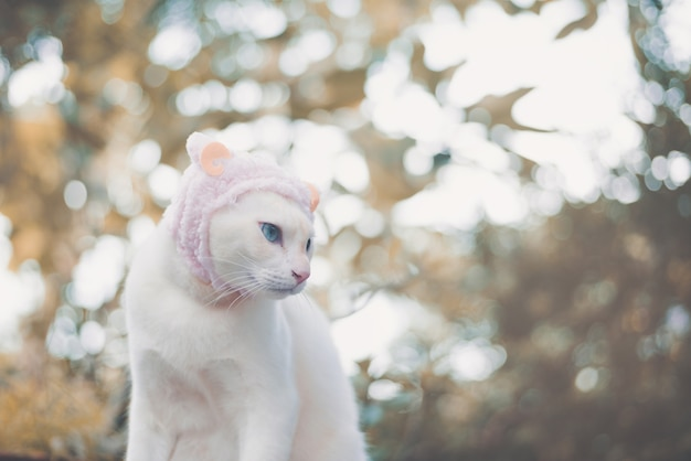 Retrato do chapéu vestindo do gato branco, conceito animal da forma.