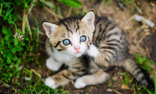 Retrato do gato engraçado ao ar livre