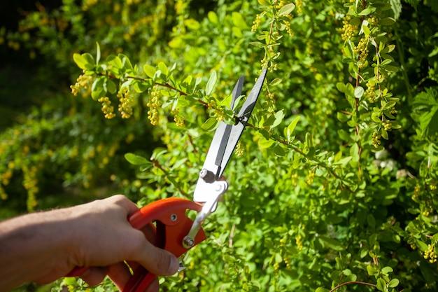 Retrato do jardineiro novo que corta o arbusto verde.