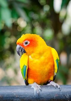 Retrato do papagaio colorido da arara com fundo verde do borrão do bokeh.