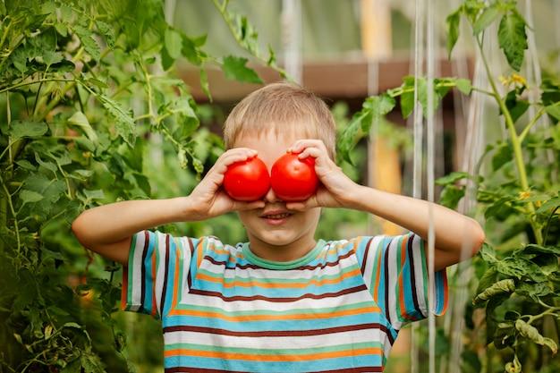 Retrato do rapaz pequeno que guarda tomates maduros na estufa.