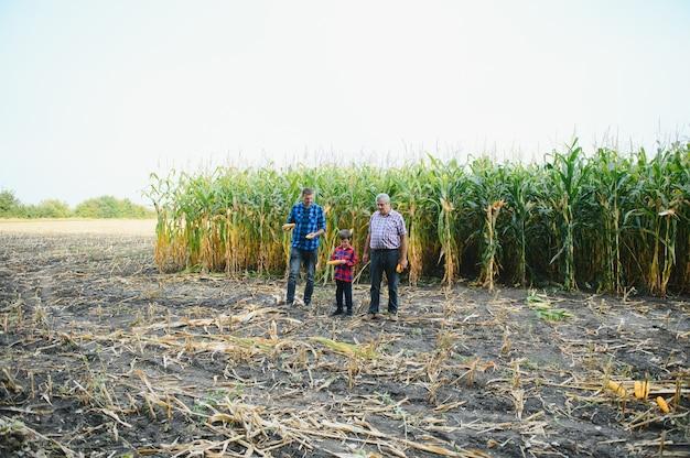 Retrato do velho agricultor em pé em seu campo cheio de colheita, juntamente com seu filho e neto. agricultura familiar.