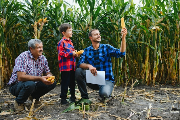 Retrato do velho agricultor em seu campo cheio de colheita, juntamente com seu filho e neto. agricultura familiar.