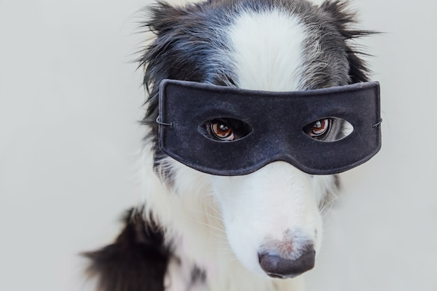 Retrato engraçado do cão bonito border collie em traje de super-herói isolado no fundo branco. filhote de cachorro usando máscara preta de super-herói no carnaval ou no dia das bruxas. justiça ajuda conceito de força.