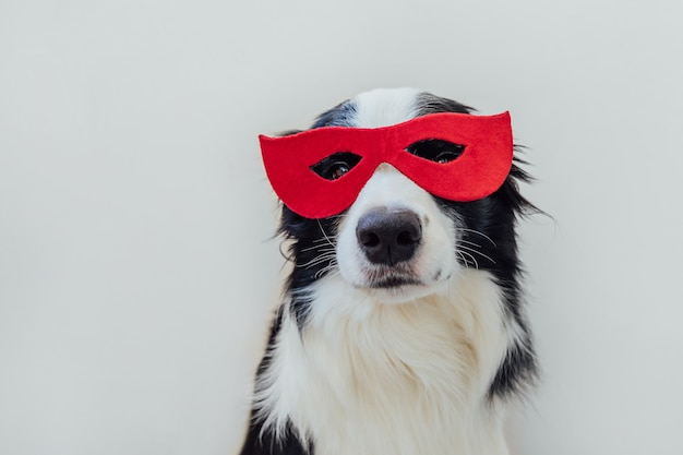 Retrato engraçado do cão bonito border collie em traje de super-herói isolado no fundo branco. filhote de cachorro usando máscara vermelha de super-herói no carnaval ou no dia das bruxas. justiça ajuda conceito de força.