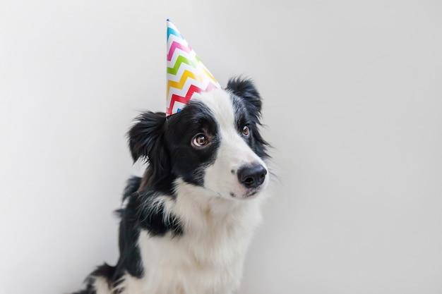 Retrato engraçado do cão de filhote de cachorro smilling bonito smilling que veste o chapéu parvo do aniversário que olha a câmera isolada no branco. feliz aniversário festa conceito. vida de animais de estimação engraçado.
