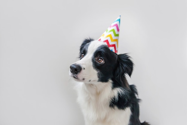 Retrato engraçado do cão de filhote de cachorro smilling bonito smilling que veste o chapéu parvo do aniversário que olha a câmera isolada no fundo branco. feliz aniversário festa conceito. vida de animais de estimação engraçado.