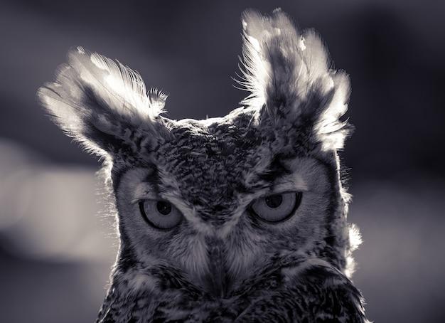 Retrato engraçado do close up da coruja