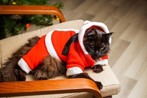 Retrato festivo do gato preto fantasiado de papai noel na poltrona contra o fundo da árvore de natal
