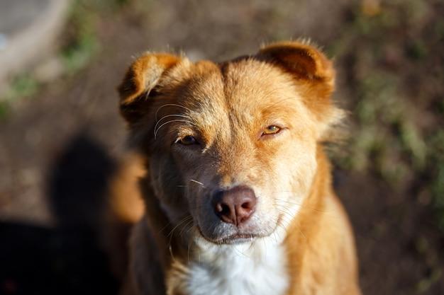 Retrato jovem cão ao pôr do sol