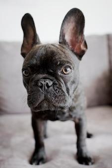 Retrato pequeno adorável do cachorrinho