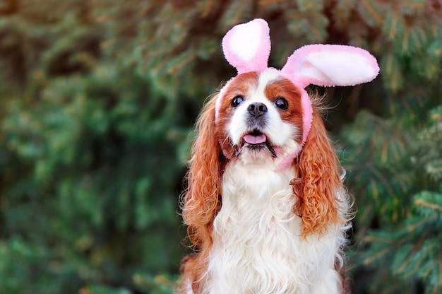 Retrato principal de um cão usando orelhas de coelho de páscoa