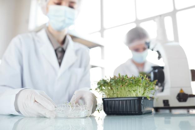 Retrato recortado de duas cientistas estudando amostras de plantas em um laboratório de biotecnologia, foco no primeiro plano, espaço de cópia