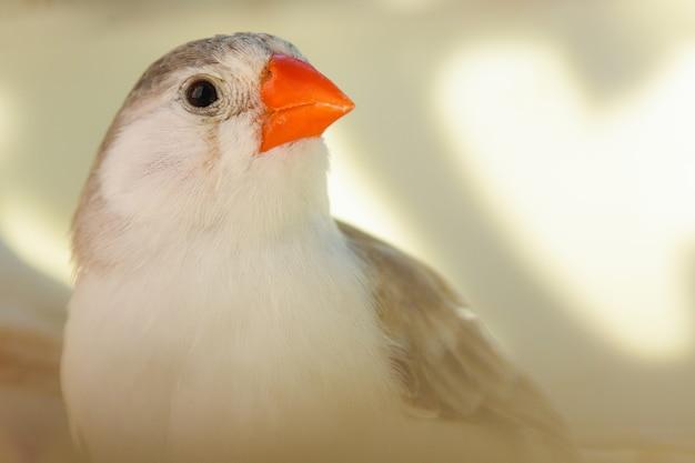 Retrato sobre um passarinho fofo sobre fundo claro
