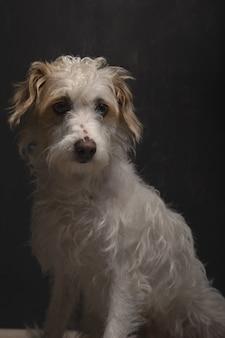 Retrato vertical de um lindo cão sem raça definida sentado no quarto escuro