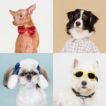 Retratos de cães fofos com fantasias