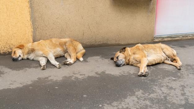 Retratos de um cachorro sem-teto no chão de um corredor da cidade