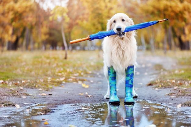 Retriever com guarda-chuva