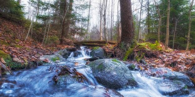 Riacho azul na floresta densa de outono
