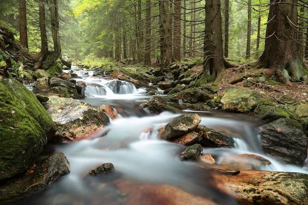 Riacho da floresta fluindo das montanhas