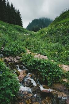 Riacho de água cristalina em montanhas com neblina na primavera