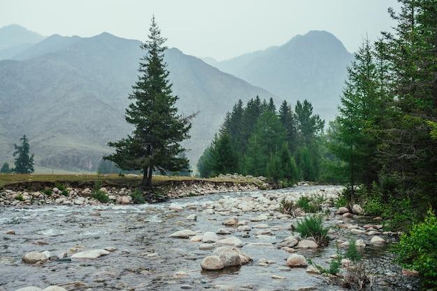 Riacho de montanha com muitas pedras em águas claras entre árvores coníferas