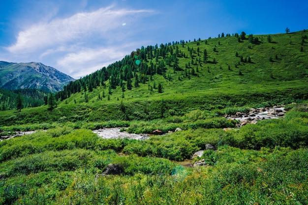 Riacho de montanha no vale entre grama verde vívida e vegetação rica das montanhas