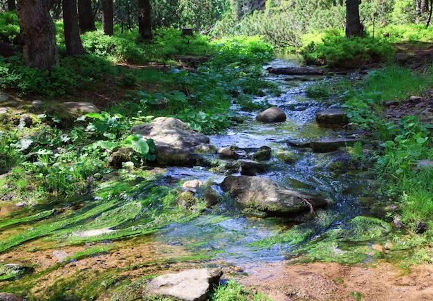 Riacho de verão com pedras e algas na floresta