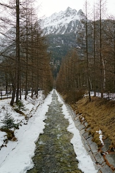 Riacho e árvores