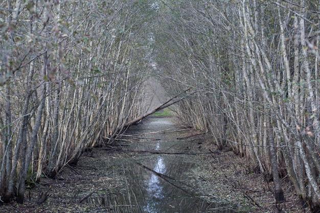 Riacho entre arbustos no pântano