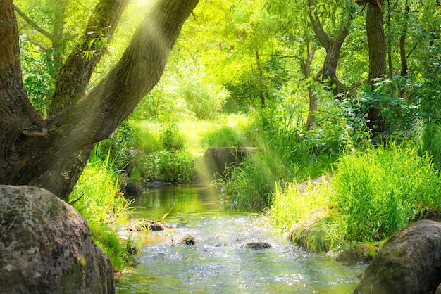 Riacho na floresta tropical