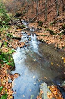 Riacho rochoso, passando pela floresta de montanha de outono