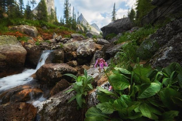 Riachos de montanha fabulosos, vegetação exuberante e flores ao redor. água de nascente descongelada das montanhas. vistas mágicas de altas montanhas