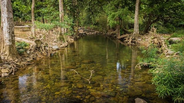 Riachos na floresta