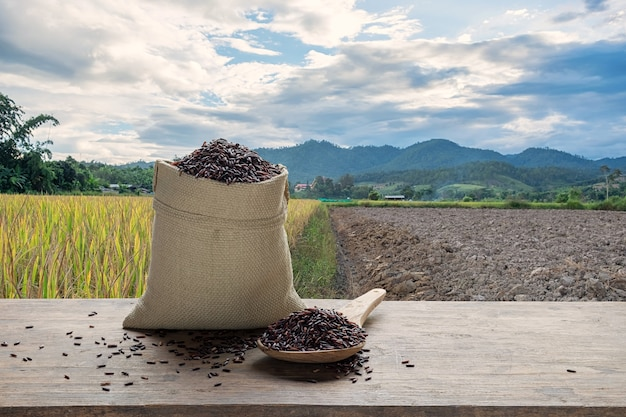 Riceberry ou arroz não cozido com o campo em terraced arroz background