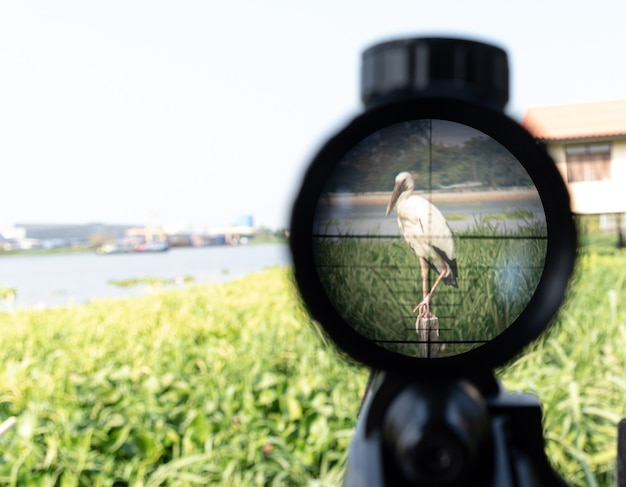 Rifle de mira voltado para pelicanos