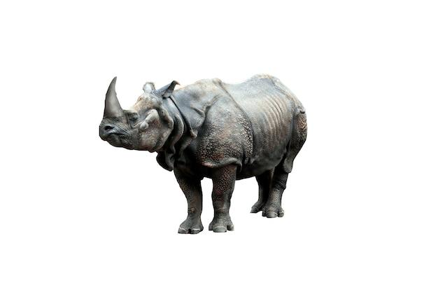 Rinoceronte com chifre