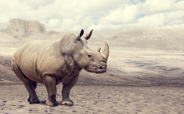 Rinoceronte em estado selvagem