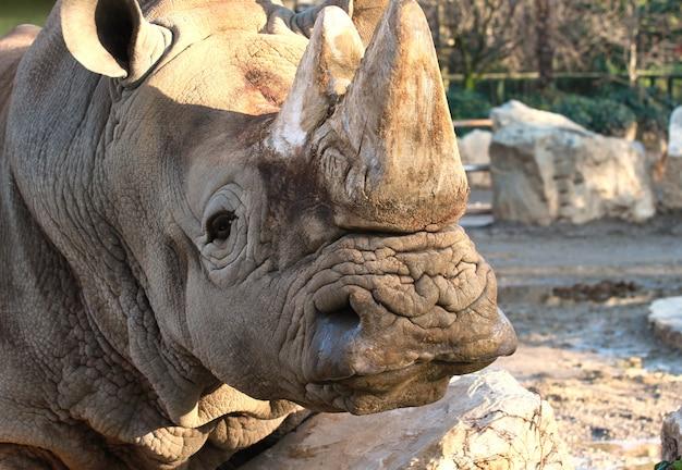Rinoceronte no zoológico