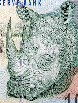 Rinoceronte, um retrato de dinheiro sul-africano