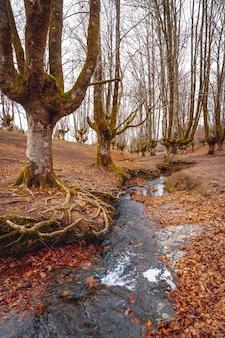 Rio cercado por árvores e folhas secas na floresta otzarreta, basca