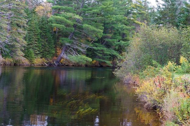 Rio cercado por vegetação no parque provincial de algonquin no outono