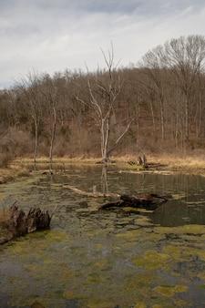 Rio coberto de musgos cercado por grama seca e árvores nuas sob um céu nublado