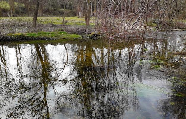 Rio com água limpa e árvores sem folhas ao redor