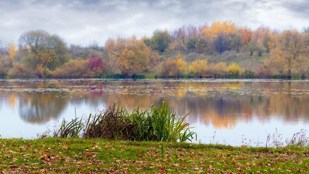 Rio com árvores coloridas e juncos nas margens no outono, folhas caídas de outono na grama perto do rio
