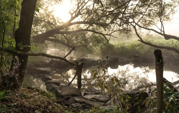 Rio com corredeiras no meio do nevoeiro na floresta em uma manhã de outono