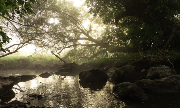 Rio com corredeiras no nevoeiro na floresta pela manhã ao amanhecer.